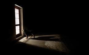 Picture each, dog, the door