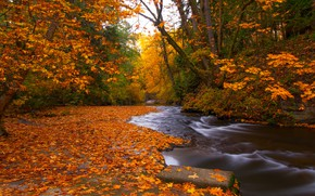 Picture autumn, forest, leaves, trees, river, foliage, Canada, Canada, British Columbia, British Columbia, Nanaimo, Bowen Park, …