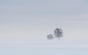 Picture snow, tree, horizon