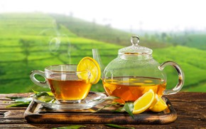 Picture greens, leaves, the sun, landscape, table, background, lemon, tea, field, hot, kettle, couples, Cup, Board, …
