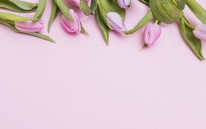 Picture Flowers, Spring, Tulips, Background, Buds