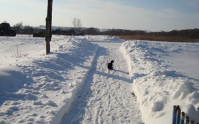 Picture track, cat on a walk, winter pages
