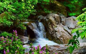 Wallpaper Flowers, Waterfall, Stones, Nature, Flowers, Waterfall