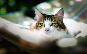 Picture cat, summer, cat, look, face, stay, hammock, bokeh