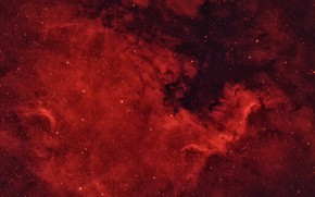 Picture Swan, in the constellation, NGC7000, The North America Nebula