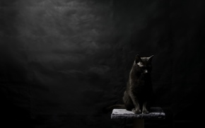 Picture cat, background, black