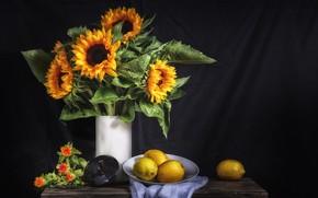 Picture flowers, lemon, sunflower, citrus, still life