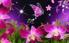 Wallpaper flower, butterfly, beautiful