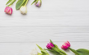 Picture flowers, spring, colorful, tulips, pink, wood, pink, flowers, romantic, tulips, spring