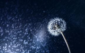 Picture macro, nature, dandelion