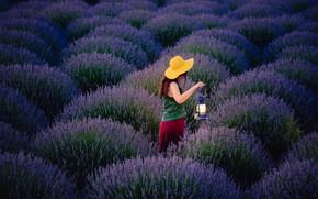 Wallpaper lavender, lamp, walk, field, girl, the evening, flowers