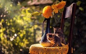 Picture cat, summer, cat, kittens, bokeh