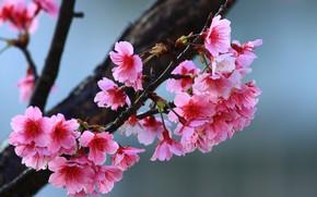Picture flowers, tree, spring, flowering tree, twigs