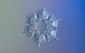 Picture ice, winter, pattern, snowflake