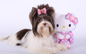 Picture toy, puppy, bow, Terrier