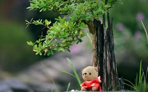 Picture tree, toy, bear