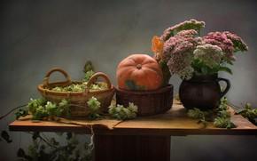 Picture autumn, flowers, basket, pumpkin, still life, hops, November, stonecrop