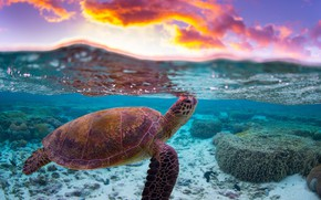 Picture sea, water, clouds, the ocean, turtle, reef, split
