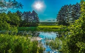 Wallpaper greens, summer, the sky, grass, the sun, trees, pond, the reeds, Ukraine, Poltava