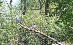 Picture water, trees, nature, bird, wings, beak, river tern