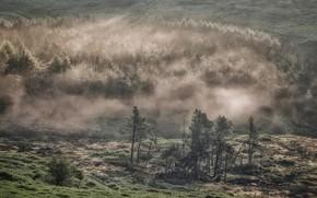 Picture trees, fog, hills, England, Derbyshire