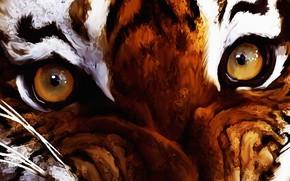 Wallpaper axlsalles, eyes, Digital Art, year of the tiger, look