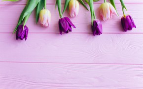 Picture flowers, tulips, pink, fresh, wood, pink, flowers, beautiful, tulips, spring, purple, tender