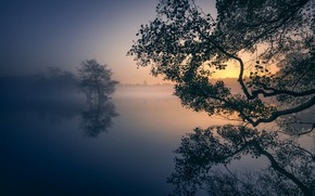Picture trees, fog, lake, Park, reflection, dawn, England, London, morning, London, England, Richmond Park, Richmond Park, …