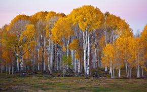 Wallpaper autumn, grove, paint, trees, aspen