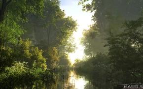 Picture nature, river, vegetation, Bank, side arm