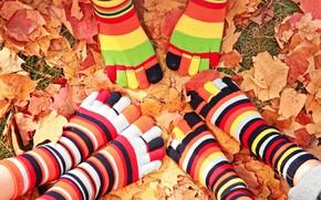 Picture autumn, leaves, feet, socks