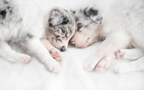 Picture dogs, comfort, house, puppies