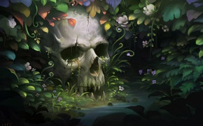 Picture thickets, skull, teeth, jungle, jaw, human