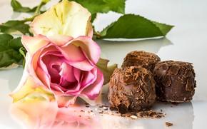 Picture rose, chocolate, chocolates