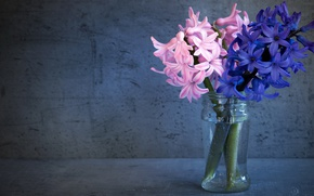 Picture glass, flowers, background, bouquet, Bank, pink, still life, blue, composition, hyacinths