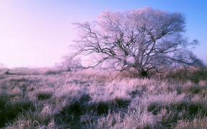 Picture frost, field, nature, tree