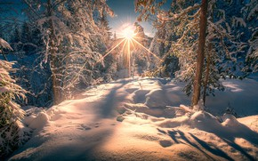 Picture winter, forest, the sun, rays, snow, trees, the snow