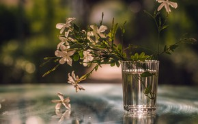 Wallpaper background, glass, flowers