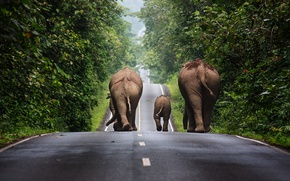 Picture trees, track, Thailand, elephants, traffic