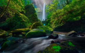 Picture greens, forest, leaves, trees, stream, stones, rocks, people, waterfall, moss, USA, the bushes