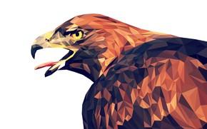 Picture bird, triangles, portrait, head