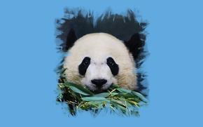 Picture look, foliage, art, Panda