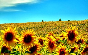 Picture field, summer, the sky, color, sunflowers, yellow, rendering, blue, cloud, horizon, Sunny day