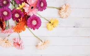 Picture flowers, background, gerbera