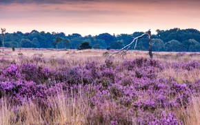 Picture field, flowers, tree