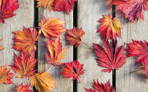 Wallpaper autumn, leaves, background, wood