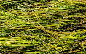 Picture field, summer, grass, green, stems, meadow