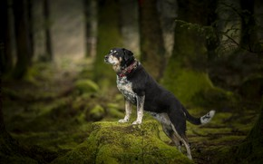 Picture forest, pose, each, dog