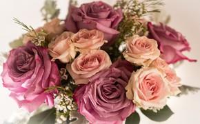 Picture roses, bouquet, composition
