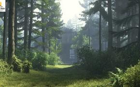 Picture road, forest, summer, vegetation, old house